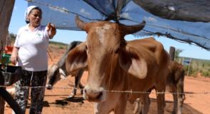 Comunidades tradicionais do Norte de Minas cobram regularização de terras