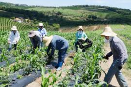 Audiência na ALMG vai debater agricultura familiar e sustentabilidade