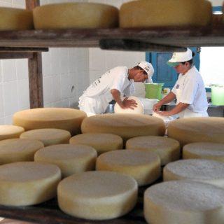 Aprovado projeto que oficializa a produção de queijo artesanal em Minas