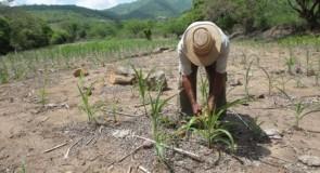Minas ganha Plano de Enfrentamento da Pobreza no Campo