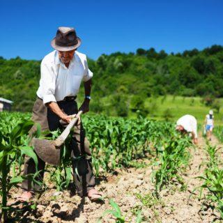 Abertos editais de chamadas públicas para aquisição de alimentos da agricultura familiar